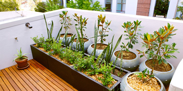 Memanfaatkan atas rumah menjadi kebun